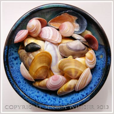 Arrangement of Seashells 2