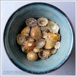 Arrangement of Seashells 5 - Mostly common British Limpet shells.