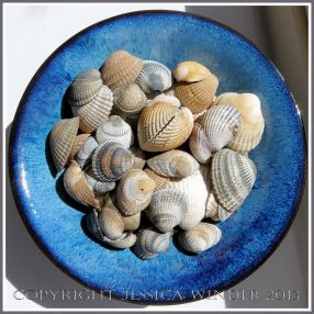 Arrangement of Seashells 6
