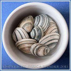 Arrangement of Seashells 7 - Striped British bivalve shells.