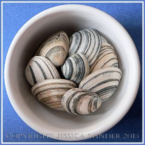 Arrangement of Seashells 7 - Striped British bivalve shells.