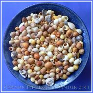 Arrangement of Seashells 3 - Mostly colourful common British seashells like Flat Periwinkles.