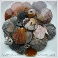 Arrangement of Seashells 11 -