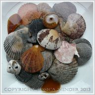 Arrangement of Seashells 11 - Mostly small variegated scallop shells with a Manila Clam, top shells, and sea glass, in a bowl of water -common British seashells.