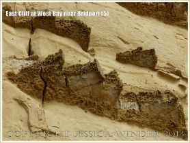 East Cliff at West Bay near Bridport (5) - The honeycomb texture of the harder layers forming ledges on the cliff is due to the action of wind-blown sand differentially eroding the rock. These hard calcareous bands are riddled with trace fossils of the burrows of animals that once lived in the sea bed.