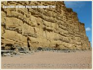 East Cliff at West Bay near Bridport (20) - At the base of the cliff there is a long, undulating, interrupted curve of hard strata instead of the normal level horizontal layer like those seen above it in the cliff face. This anomaly is thought to be a scour structure resulting from a major storm event disturbing an early deposition of Bridport Sand Formation.