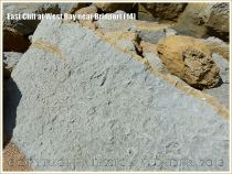 East Cliff at West Bay near Bridport (14) - Recently fallen rocks on the beach are a blue-grey colour and not yellow as on the face of the cliff. Blue-grey is the natural colour of Bridport Sands but the pyrite which it contains is oxidised on exposure to air to give a superficial rusting that gives the yellow colour to the cliffs. This boulder also shows unweathered bioturbations - ichno- or trace fossils of animal burrows.