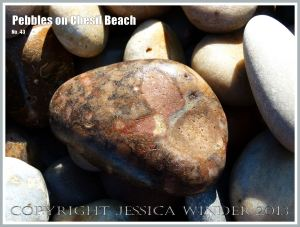 Patterned pebble on the beach