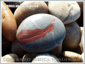 Grey pebble with a bright red mark