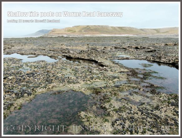 Shallow tide pools on Worms Head Causeway - View looking north-west towards the Rhossili headland, Gower, South Wales, from the causeway at low tide, showing numerous tide pools on the jagged rock surface, suitable habitats for Snakelocks Anemones..