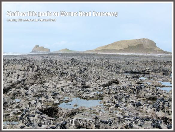 Shallow tide pools on Worms Head Causeway - View looking north-east towards the Worms Head, Gower, South Wales, from the causeway at low tide, showing numerous tide pools on the jagged rock surface, suitable habitats for Snakelocks Anemones..