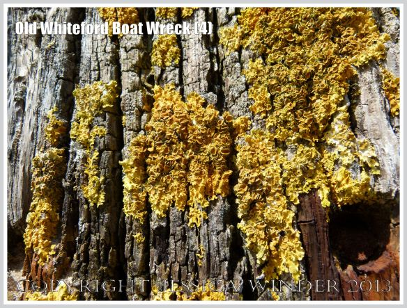 Yellow lichen on weathered timber with rusty ironwork on the remains of a small boat wreck