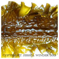 SEAWEED 3 - Common British seaweed called Sea Belt, Poor Man's weatherglass, Laminaria saccharina. You can find posts about SEAWEED in Jessica's Nature Blog.