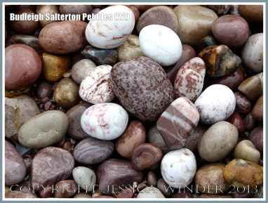 Wet pebbles with different colours and patterns on the seashore