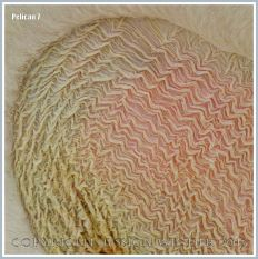 Close-up of the pattern of wrinkled skin in the pouch beneath the bill of a pelican which it uses for carrying fish
