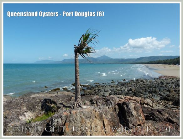 View looking south along Three Mile Bay, Port Douglas.