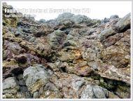 Fault Gully rocks