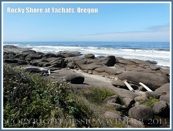The rocky shore at Yachats, Oregon, USA, where the goose barnacles live.