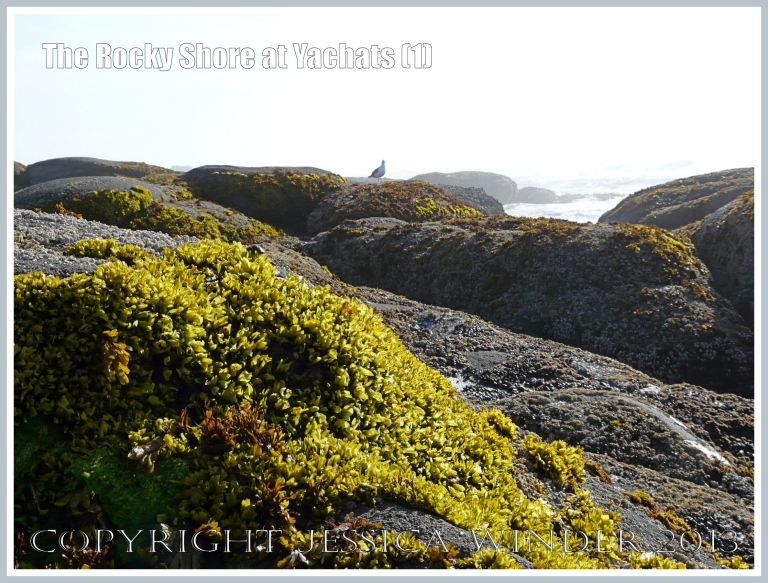 The raw beauty of the Oregon Coast rocks at Yachats