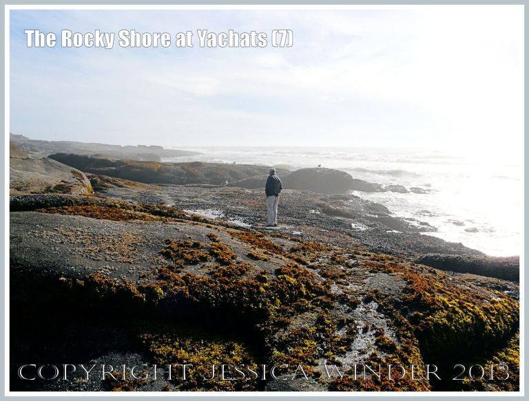Hazy sunshine makes seaweeds glow vividly on the rocky shore at Yachats.
