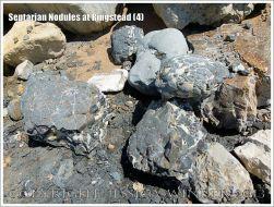 Septarian Nodules at Ringstead (4)