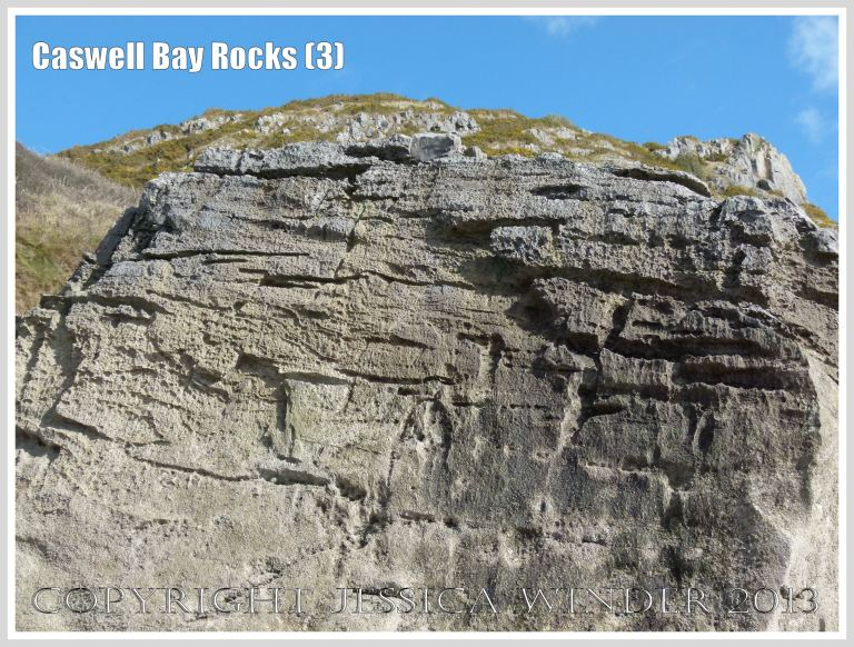 Carboniferous Limestone formations at Caswell Bay, Gower, South Wales, UK.