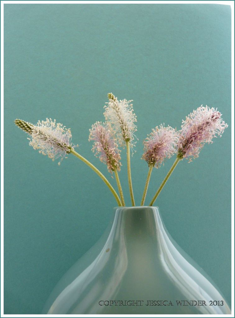 Still life photograph of Hoary Plantain flowers