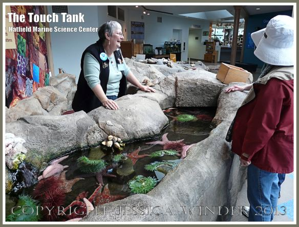 The Touch Tank at Oregon State University Marine Science Center