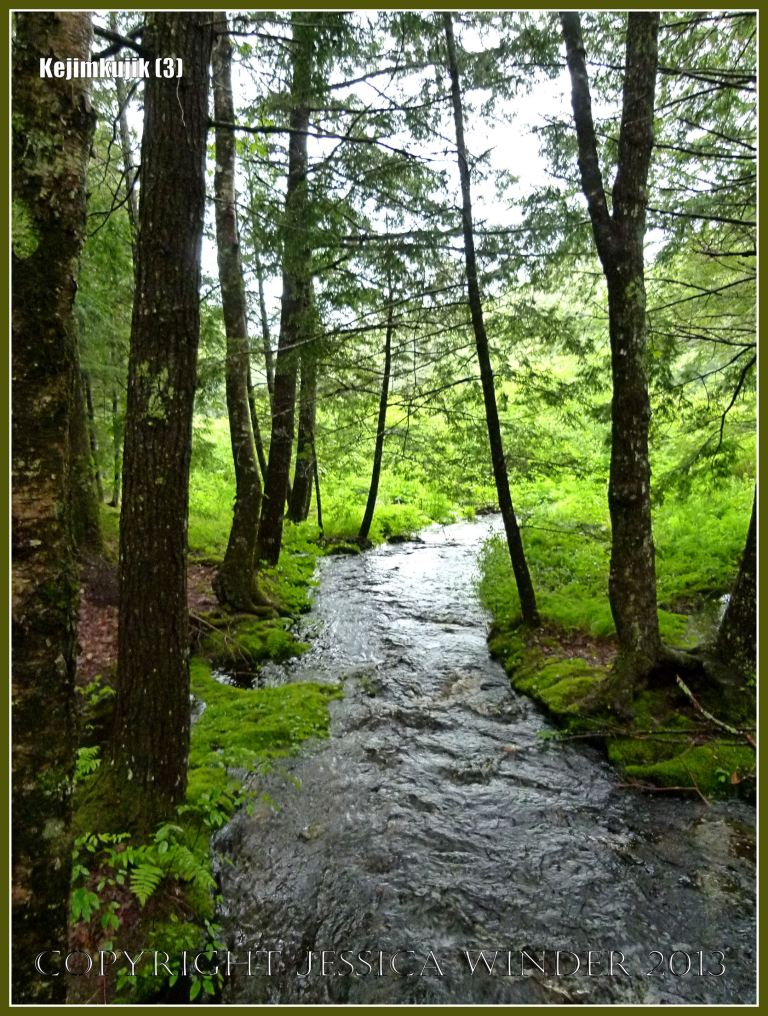 Stream running through the forest at Kejimkujik National Park