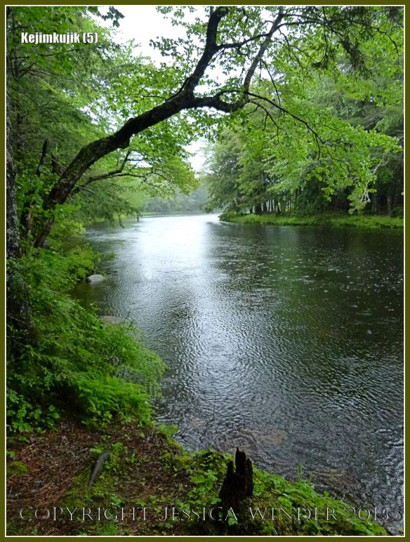 River Mersey flowing through the forest at Kejimkujik National Park in Nova Scotia.