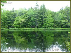Riverside trees reflected in water at Kejimkujik National Park