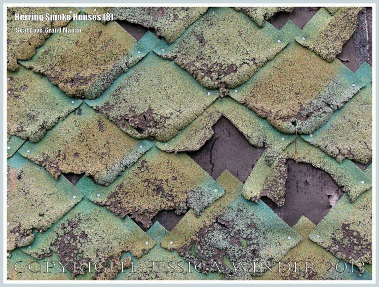 Close-up of tattered green weather-proofing tiles on an old herring smoke houses at Seal Cove, on the island of Grand Manan, New Brunswick, Canada.