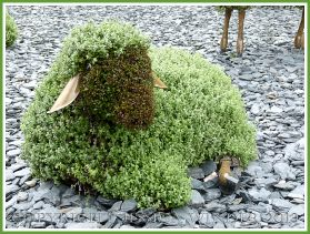 A mosaiculture sheep sculpture - part of a mosaiculture tableau depicting the shepherd who changed a desolate and arid land into fertile fields and forest by planting trees.