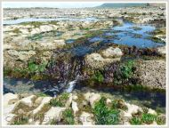 Gullies with seaweed in Carboniferous Limestone wave-cut platform