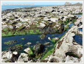 Gullies with seaweed in Carboniferous Limestone wave-cut platform