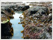 Gully with seaweed in Carboniferous Limestone wave-cut platform