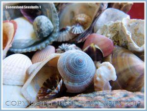 Assorted seashells from the Queensland coast in Australia.