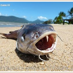 A dead fish on a sandy tropical beach