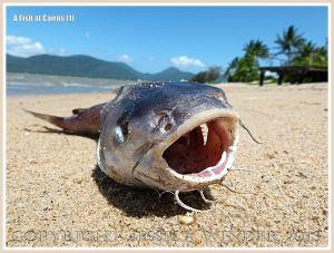 A dead fish on a sandy tropical beach
