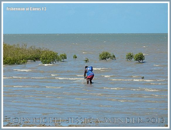 Man fishing with net at Cairns on the Queensland Coast.
