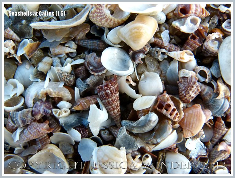 An assortment of small seashells lying on the beach at Cairns