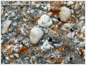 Detail of a boulder on the beach used as a defence against coastal erosion