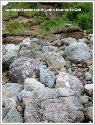 Storm beach boulders at Broughton Bay