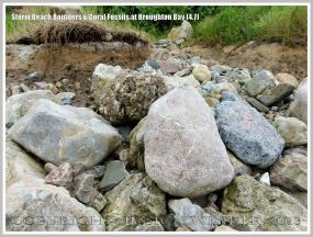 Storm beach boulders with coral at Broughton Bay