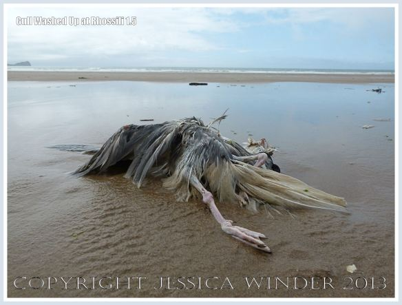 Dead and decomposing seagull washed up on a sandy beach