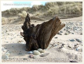 Aspect of a piece of driftwood on a sandy beach with pebbles