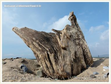 Driftwood at Whiteford Point 1.4
