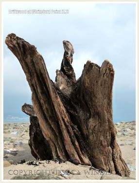 Driftwood at Whiteford Point 1.7