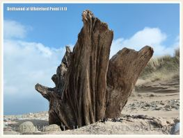 Driftwood at Whiteford Point 1.1