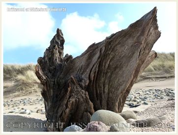 Driftwood at Whiteford Point 1.3